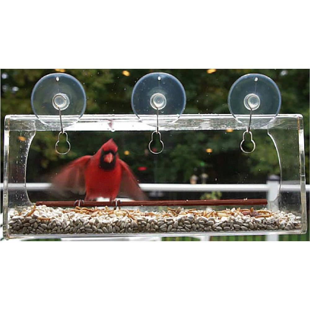cardinal lands at window feeder