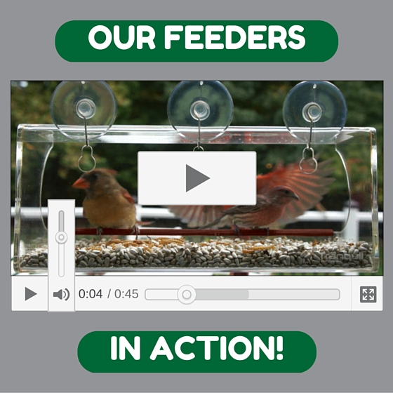 window feeder videos